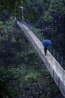 下り列車を走行する列車は森の近く追跡します。の写真・画像素材[1249589]