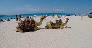 自然,空,ビーチ,リラックス,砂漠,ラクダ,女子旅,海外旅行,ドバイ