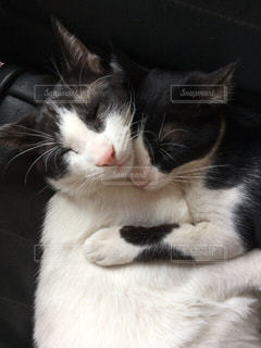 猫,お部屋,かわいい,部屋,仲良し,ねこ,リラックス,癒し,お昼寝,のんびり,まったり,ゴロゴロ,ネコ,ふみふみ