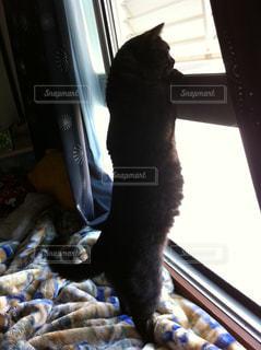 窓の前で立っている猫の写真・画像素材[1275172]