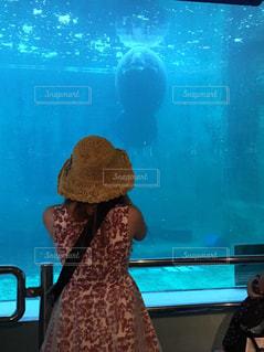 海,水族館,沖縄,美ら海水族館
