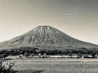 羊蹄山とジャガイモ畑の写真・画像素材[813587]