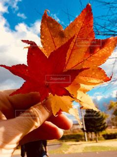 紅葉の写真・画像素材[842292]