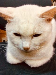 猫 - No.871467