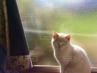 白猫 - No.933780