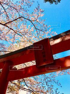 鳥居と青空の写真・画像素材[1115521]