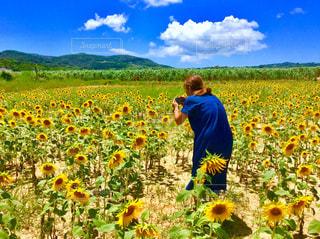 久米島のヒマワリ畑🌻の写真・画像素材[1370651]