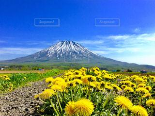 山の前に黄色の花の写真・画像素材[1375002]