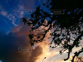 モンパの木と夕焼けの写真・画像素材[1481563]