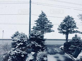 木,雪,北海道,豪雪,銀世界,真っ白