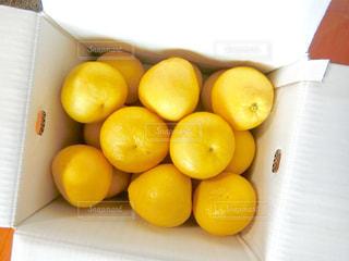 黄色,果物,イエロー,文旦,柑橘類