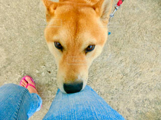 犬の写真・画像素材[2014574]