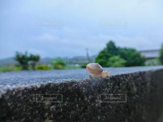 カタツムリの写真・画像素材[2172775]