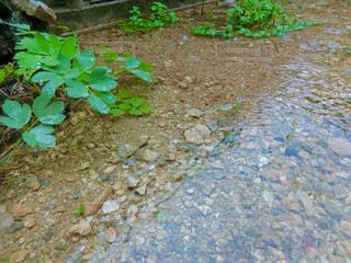 雨の日の庭の写真・画像素材[2228213]