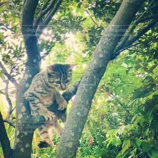 猫,動物,ペット,人物,ネコ,木のぼり
