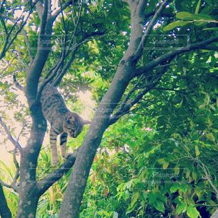 猫,動物,木,樹木,ペット,人物,木陰,ネコ,木のぼり