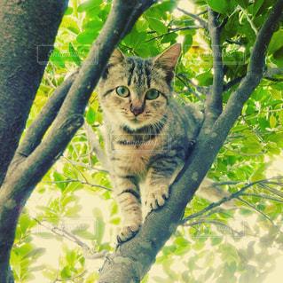 猫,動物,ペット,人物,木陰,ネコ,木のぼり
