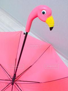 フラミンゴの傘の写真・画像素材[794364]
