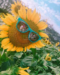 花のクローズアップの写真・画像素材[2383053]