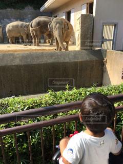 子ども,自然,夏,動物,子供,ゾウ,象,幼児,動物園,生き物,男の子,獣,ぞう,金沢動物園,けもの,PassMe,横浜市立金沢動物園