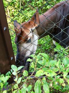 ワイヤー フェンスの横に茶色の馬立っての写真・画像素材[757916]