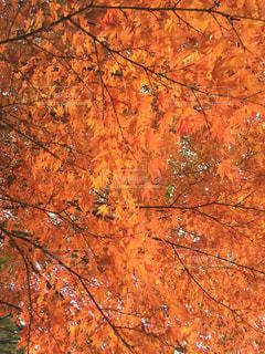 近くの木のアップの写真・画像素材[895428]