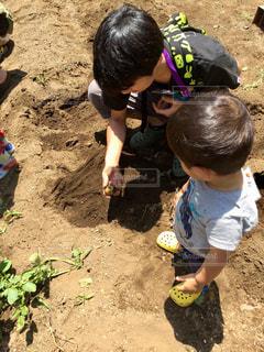 子ども,屋外,親子,子供,人物,人,土,地面,幼児,パパ,男の子,父,子,お父さん,芋掘り,土壌,じゃがいも
