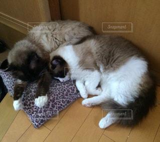 猫の写真・画像素材[690241]