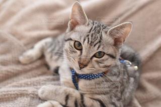 ベッドの上で横になっている猫の写真・画像素材[1258734]