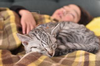 ベッドの上で横になっている猫の写真・画像素材[1258741]