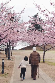 桜,後ろ姿,人物,背中,人,後姿,おじいちゃん,孫