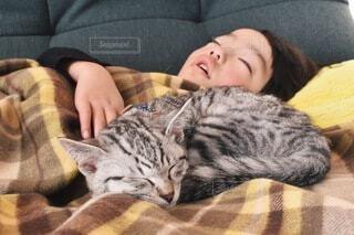 猫と子供の写真・画像素材[4162656]