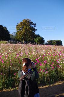 カメラ女子,コスモス,昭和記念公園