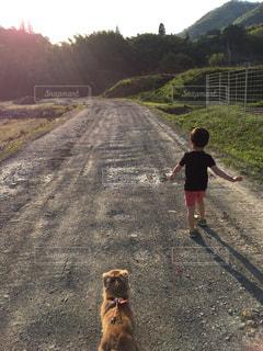 散歩,夕方,田舎,道,ダックス,男の子,愛犬,いつも一緒