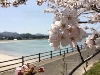 花のクローズアップの写真・画像素材[4310517]