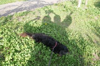犬の写真・画像素材[472846]