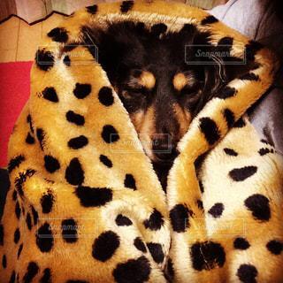 犬の写真・画像素材[472851]