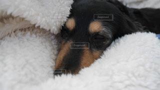 犬の写真・画像素材[472866]