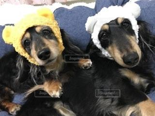 近くに犬のアップの写真・画像素材[1185454]