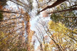 フォレスト内のツリーの写真・画像素材[849635]