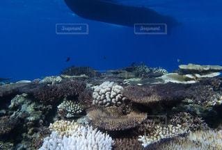 海の写真・画像素材[635902]