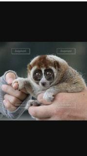 小動物を持っている手の写真・画像素材[752848]