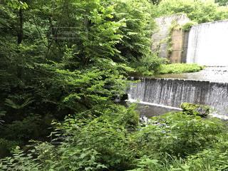 緑の葉に囲まれた滝 - No.757949