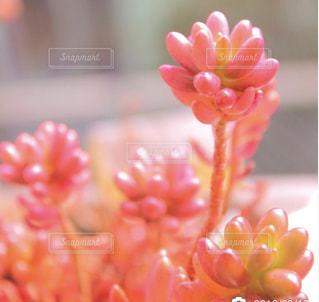 近くの花のアップの写真・画像素材[769394]