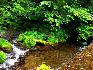 森の中の滝 - No.774907
