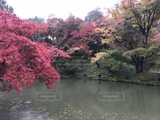 近くに池のアップの写真・画像素材[867991]