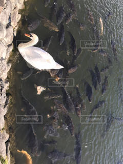 水の体の横にある岩の上に座っている鳥の写真・画像素材[931458]