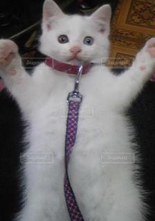 鏡の前で座っている猫の写真・画像素材[974234]