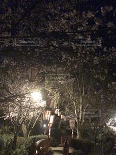 2018.3月 撮影の写真・画像素材[1149284]