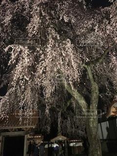 近くの木のアップの写真・画像素材[1149321]